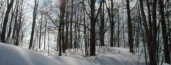 Parco regionale dei Monti Simbruini: bosco innevato
