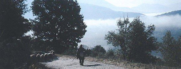 Gregge di pecore nella valle dell'Aniene